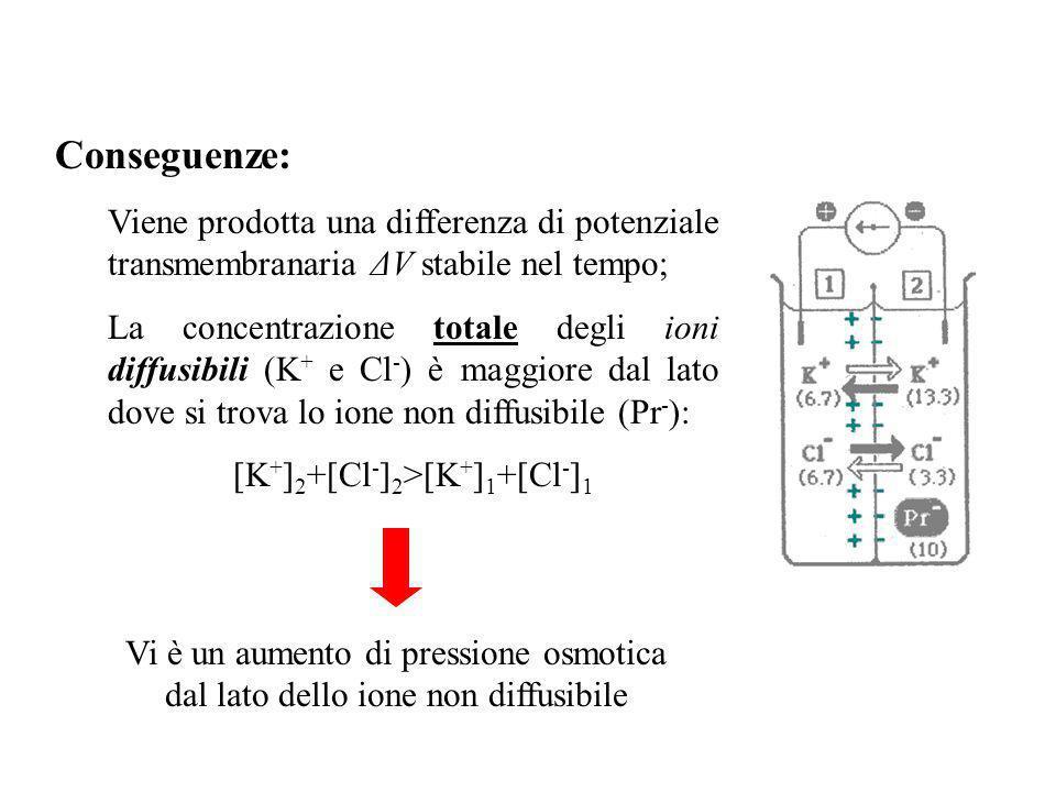 [K+]2+[Cl-]2>[K+]1+[Cl-]1